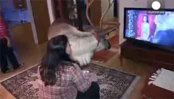 驯鹿遭抛弃被人类收养 爱上看电视
