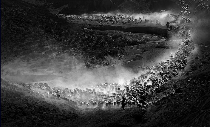 新疆游牧转场摄影作品《迁徙》入选英国皇家摄影学会156届国际摄影艺术展