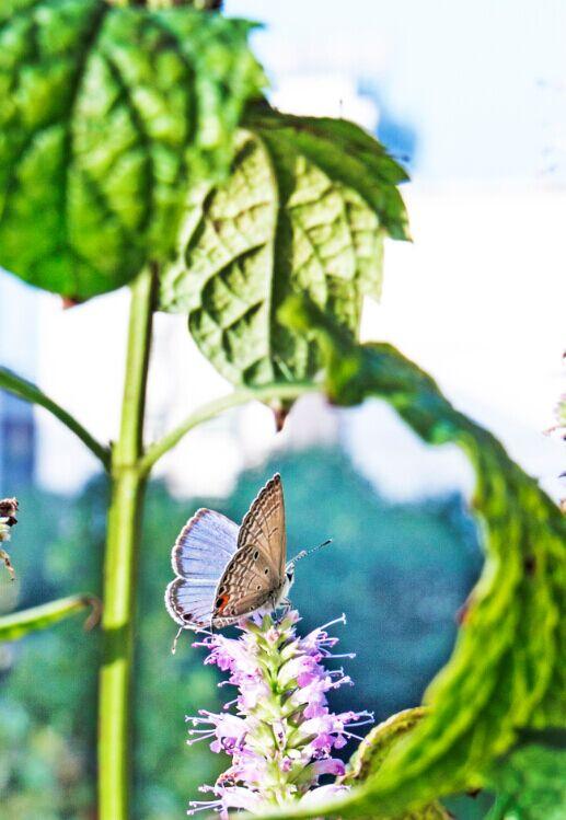 蝴蝶(佳能50D+腾龙15~30拍摄)