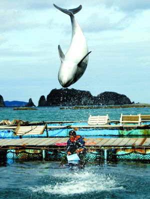 《海豚湾》终在日本上映 观众差点挤爆影院
