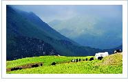 祁连山草原――中国最美的六大草原之一