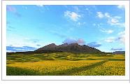 祁连油菜花――美景中的一抹金黄