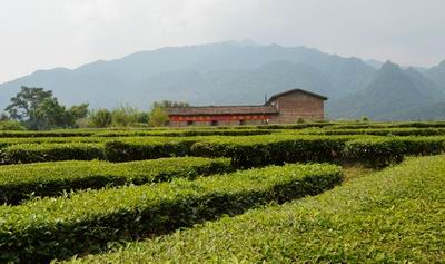 韶关市曲江区罗坑茶厂