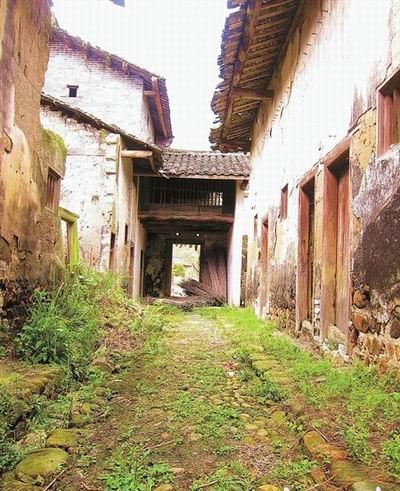 翁源大袁围屋内石头铺就的小道已经布满青苔和野草。