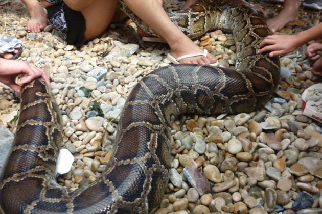 """""""大连海边惊现4米大蟒蛇缠住一妙龄少女,有图为证"""""""